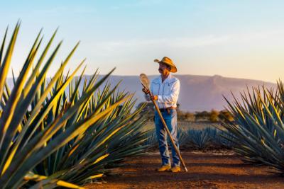 La Ruta del Tequila y su sistema de información turística.