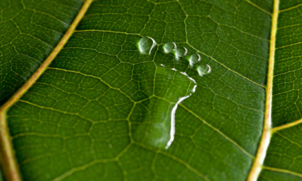 Beneficios de la medición de la huella de carbono.