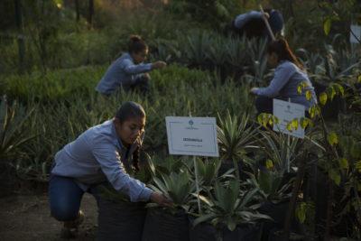 Tequila Jalisco, ciudad inteligente sostenible.