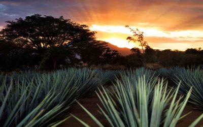 Tequila: Pueblo Mágico Inteligente un caso excepcional