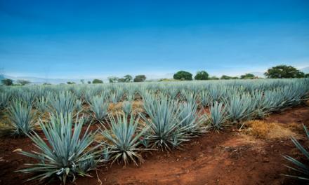 """El Consejo Regulador del Tequila (CRT) y la Denominación de Origen """"Tequila"""" (DOT), su influencia en el desarrollo turístico de la Ruta Del Tequila"""